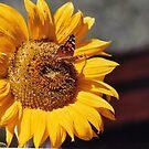 Sunshine and Butterflies by mwmclaren
