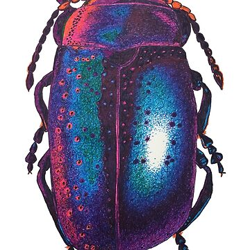 Blue Leaf Beetle Ink drawing - Chrysolina by IridescentEye