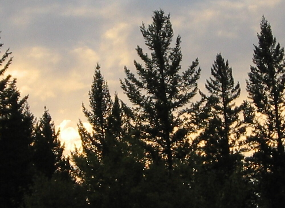 Trees at Sunset-2 by TariTheElf