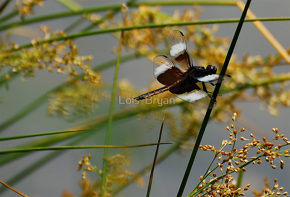 Dragonfly At The Pond by Lois  Bryan
