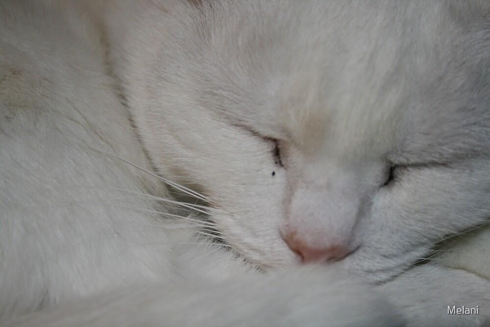 Kitty dreams by Melani