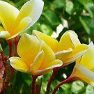 Yellow Flower by sunnykcdb