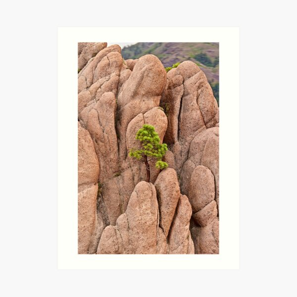 Tree and Geology Art Print