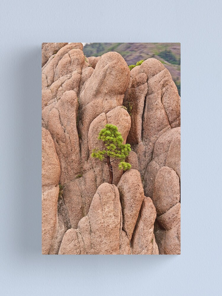 Alternate view of Tree and Geology Canvas Print