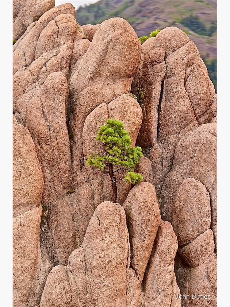 Tree and Geology by jjohnsueb