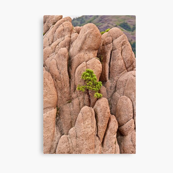 Tree and Geology Canvas Print
