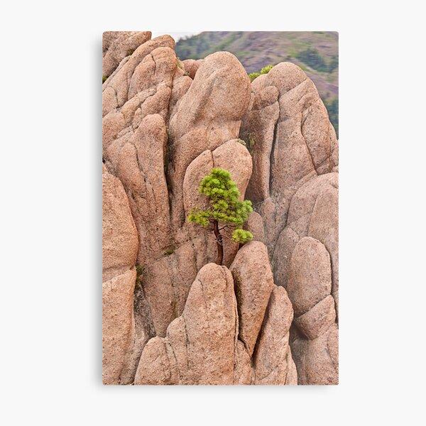 Tree and Geology Metal Print