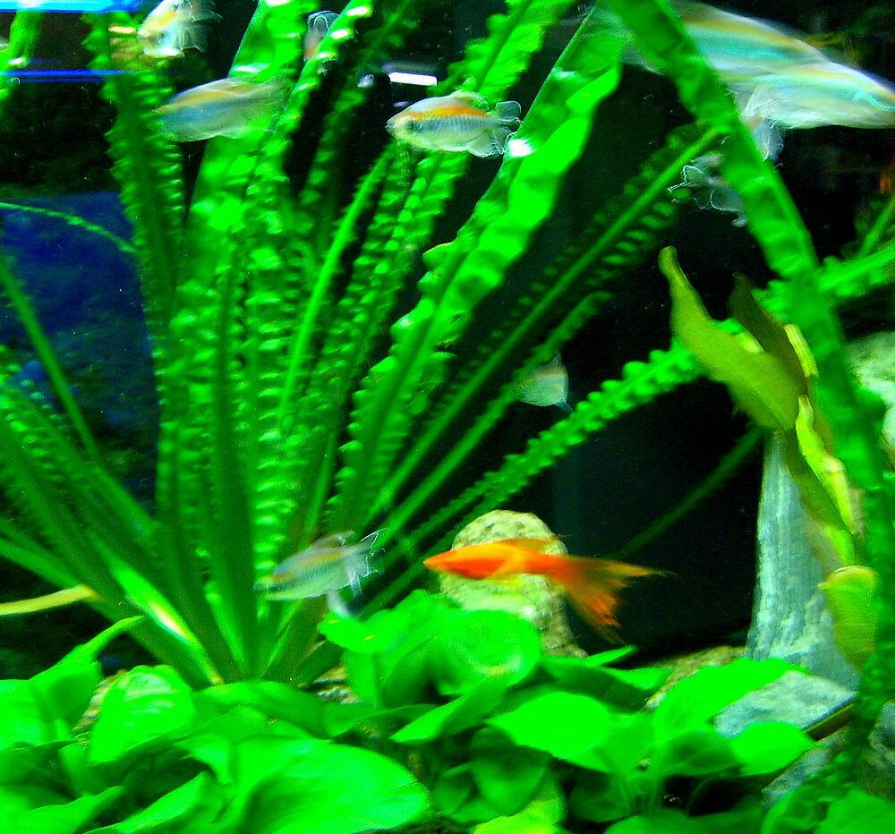 """Goldfish. . ."" by lurline"