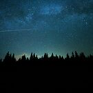 Forest, Wanderlust and a Shooting Star by Neli Dimitrova
