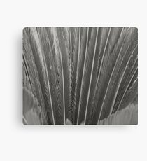 Long Grey Leaves Canvas Print