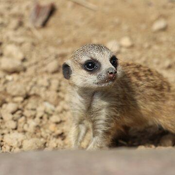 Meerkat Meerkat by eickys