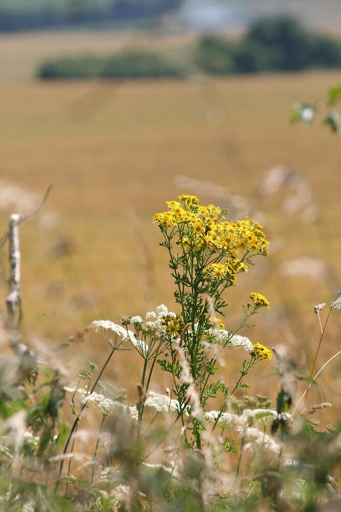 Wayland Smithy Wild Flower by DRWilliams