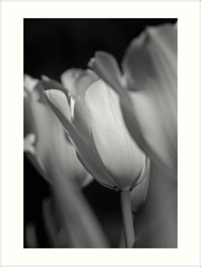 Three Tulips by EleandraSouza