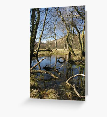 Woods in the Glebe Greeting Card