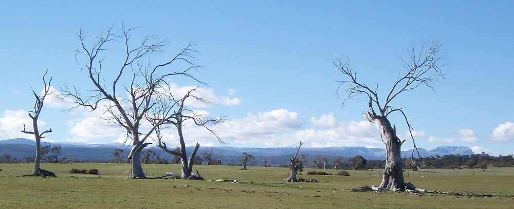 dancing trees near Nile, Tasmania by Gaylene Norton