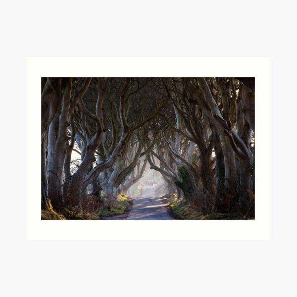 The Dark Hedges  Game of Thrones County Antrim  Northern Ireland Art Print