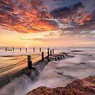 Morning Bliss by Arfan Habib