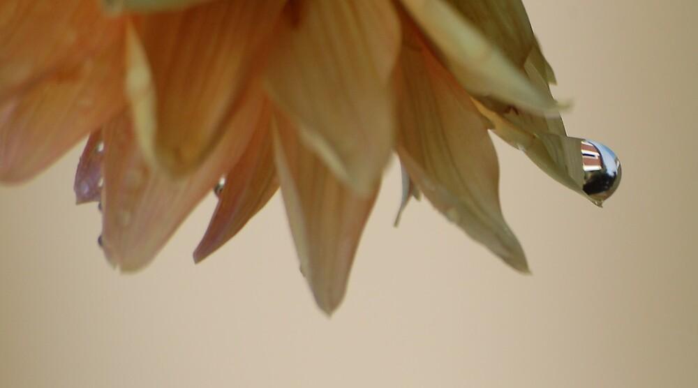 raindrop dahlie by Aina Antonsen