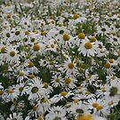 Daisy, Daisy. by Edward Gunn
