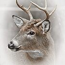 Whitetailed Deer Buck by Michael Cummings