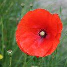 In Flanders Field by Edward Gunn