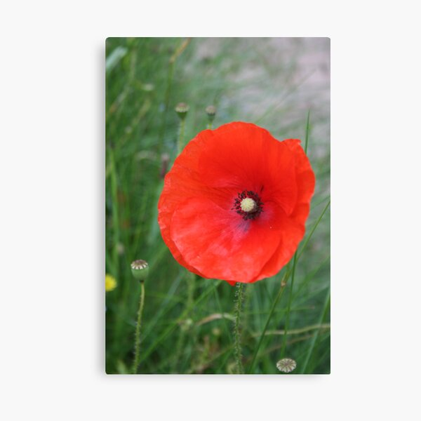 Tower of London Poppy stand//Poppy Display Stand//Acrylique Transparent Support//Poppy