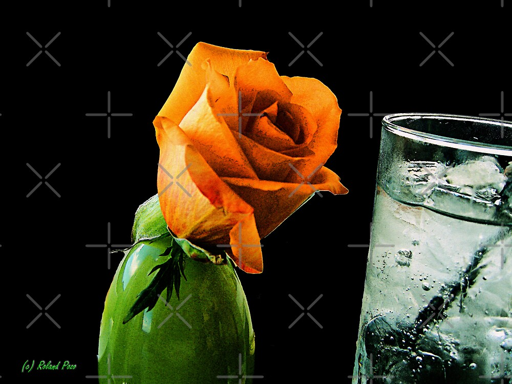 The Thirsty Rose by photorolandi