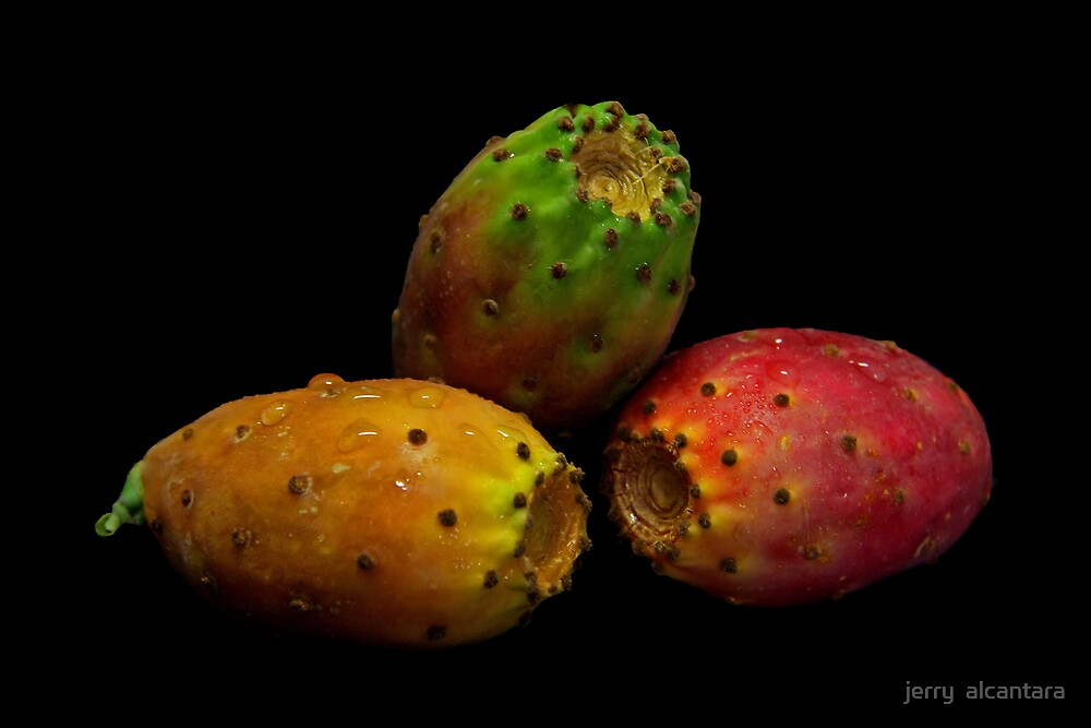 Indian Figs by jerry  alcantara