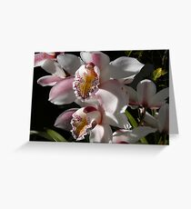 cymbidium Greeting Card