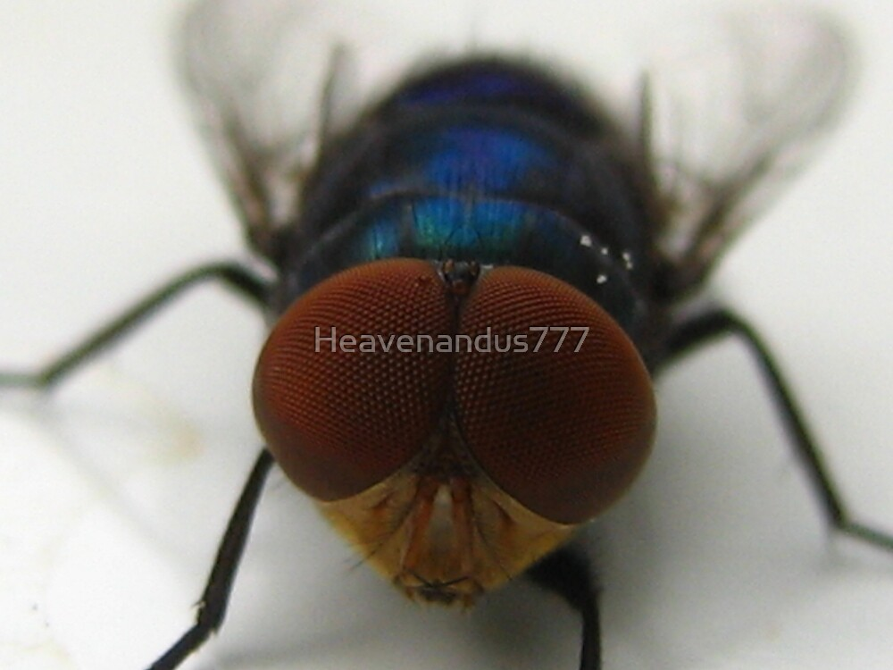 The Fly by Heavenandus777