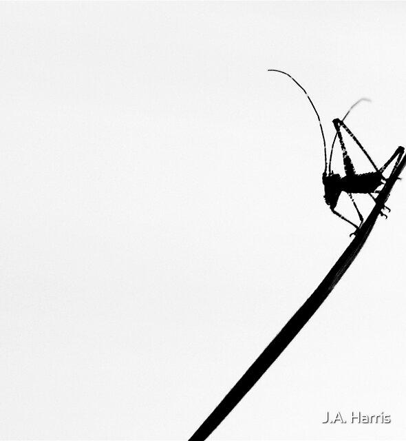 'Little Caricature' by J.A. Harris