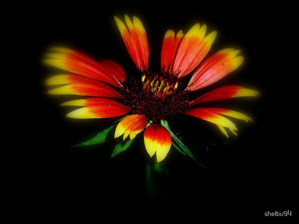 Visionary Blanket Flower by shelbu94