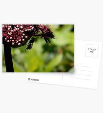 Hornet Hang Postcards