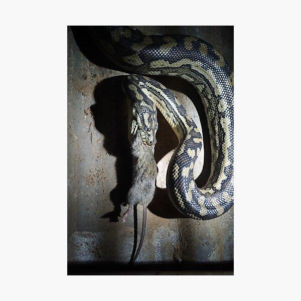 Rat-atouille Photographic Print