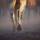 Dust walkers by Penny Kittel