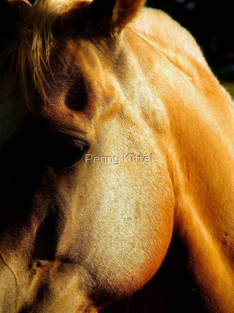 Golden horse by Penny Kittel