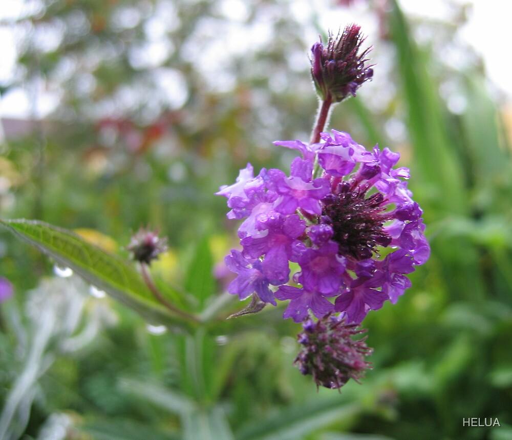 Garden Purple by HELUA