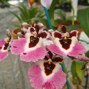 Pretty flowers! by SarahEricD