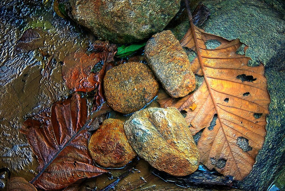 rock & leaf by singlong