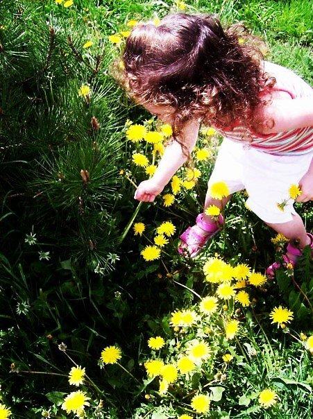 Dandelions by Jamie  Mallard