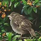 Young Autumn Sparrow by Wieskunde