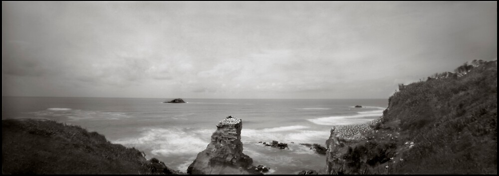 Gannet Colony 1 pinhole by gldfshbob
