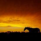 Rust Sky by Penny Kittel