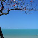 The paradise of Palm Cove  by tracyleephoto