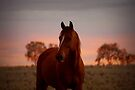 Russet Sunset by Penny Kittel