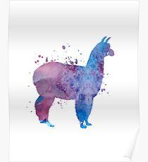 A cute llama Poster