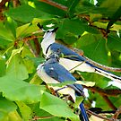 Duo Bloo Birds by Hideki Aono