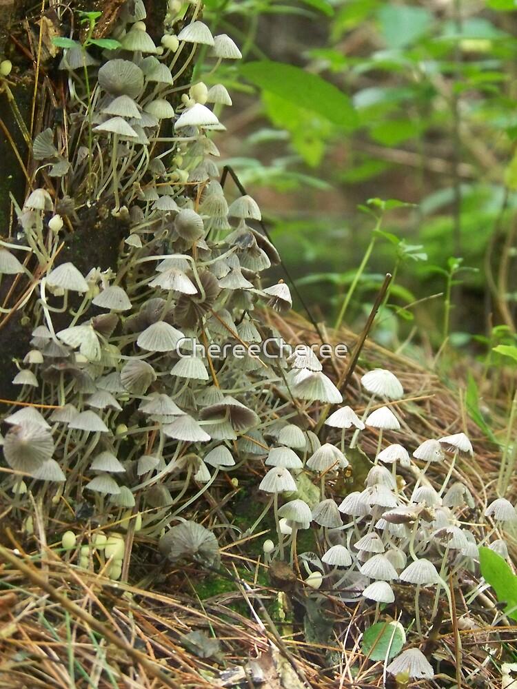 Mushrooms Galore by ChereeCheree