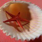 Star Fish by jwawrzyniak