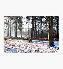 Winter in the woods, Newark Photographic Print